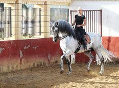 barokk lovak lovas magazin Jesús Morales Sánchez Vilcsek Alexandra spanyol iskola