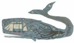 inside_the_sperm_whale.jpg 800×468 pixels
