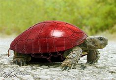 Apple Turtle. In the Asian culture turtles are believed to bring good luck...heaven knows I could sure use some.