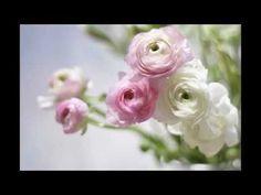 Kenny G ft Aaron Neville - Even If My Heart Would Break Lyrics ...