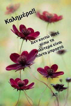 Nothing But The Blood, Abundant Life, Thinking Of You, Beautiful, Nature, Plants, Sunshine, Feels, Sayings