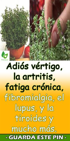 Beatríz Flores Hernández's media content and analytics Herbal Remedies, Home Remedies, Natural Remedies, Salud Natural, Healthy Herbs, Medicinal Plants, Natural Medicine, Fun Drinks, Natural Health