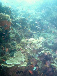 Menjangan island north bali snorkeling  (Indonesia)