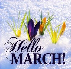 Hello March! #march hello march crocuses snow