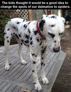 Poor thing! Just look at that sad face! But he is dressed for Halloween!