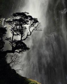As mais fortes árvores são encontradas nos locais mais expostos.  autor desconhecido  Foto: cachoeira da Tigela do Diabo na Inglaterra por Wynston Cooper