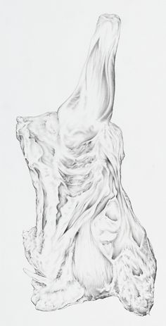 James Little  Meat Drawing   2012.  Graphite on watercolour paper