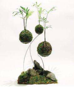 Bonsai Art, Bonsai Plants, Cactus Plants, Indoor Bonsai, Indoor Plants, Indoor Herbs, Indoor Gardening, Air Plants Care, Plant Care