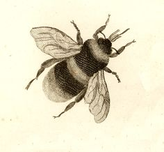 http://vintage-royalty-free-images.com/images/stock-image-11769-3-bumble-bee-.jpg
