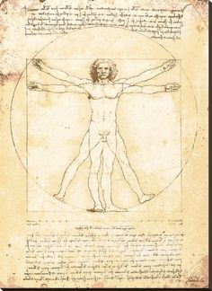Vitruvian Man Stretched Canvas Print