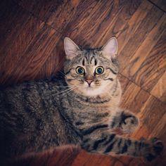 #dashamel #cat #surprisedcat #beautiful #кошка #котэ #молодость #худоба #дашка #пур #удивление