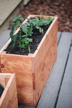 would like to do this with tomatoes and basil :)