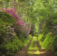 Forest Path - Moray, Scotland