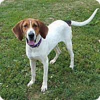 Adopt A Pet :: Shelby - Lisbon, OH