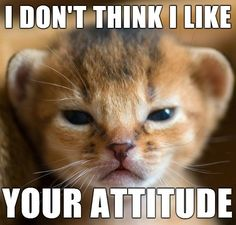 Little Cat Meme #Attitude, #Think