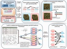 Co-LncRNA – investigating the lncRNA combinatorial effects in GO annotations and KEGG pathways based on human RNA-Seq data