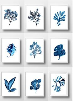 Set of 9 Sea coral print watercolor wall art beach aqua ocenic poster blue coral underwater turquoise white marine botanical picture decor by Sweeping. Wall Art Decor, Wall Art Prints, Cadre Diy, Art Aquarelle, Coral Print, Pretty Drawings, Watercolor Walls, Poster S, Beach Wall Art