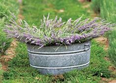 """""""plant lavender for luck"""" and other garden lore!  Interesting stuff!"""