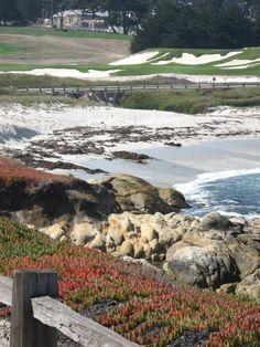 17 miles drive nabij Carmel, Californië. Een prachtige loop die je per auto kunt rijden (ca US$ 10,- entree kosten per auto), langs de kust, Pebbles Beach Golf Course en de Lone Cypress