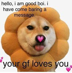 Stupid Memes, Dankest Memes, Funny Memes, Wholesome Pictures, Flirty Memes, Cute Love Memes, Cute Couple Memes, Heart Meme, Cute Messages