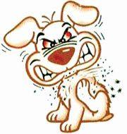 Util Dicas   Dicas para si e sua casa: Dica para espantar pulgas dos animais de estimação