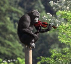 And now... music!