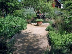 Pathways backyards and google on pinterest for California native landscape design