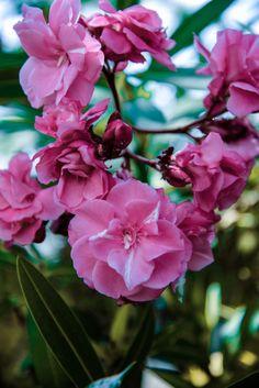 Flower  Great shot from Elen uploaded on PicsaStock