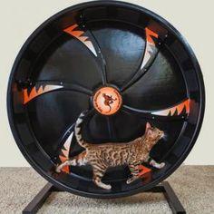 Roue d'exercice pour chat - Gadget