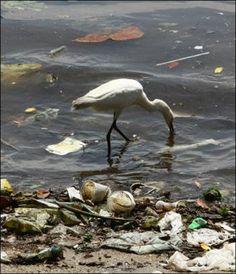 en esta foto se puede ver claro la contaminación de agua,que producen los desechos plásticos