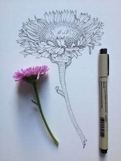 artsy в 2019 г. dibujos de flores, d Flower Sketches, Drawing Sketches, Pencil Drawings, Art Drawings, Sketching, Flower Drawings, Illustration Art, Illustrations, Motif Floral