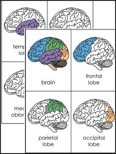 A variety of materials for 3rd-12th grades! Download Club members can download @ http://www.christianhomeschoolhub.com/pt/Brain--Nervous-System--Neuroscience-Teaching-Materials/wiki.htm