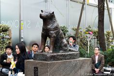 The story of Hachiko is truly an eye-watering one. In 1924, professor Hidesaburō Ueno of Tokyo University got the golden brown Akita as a pet. As a routine Hachiko greeted his owner at Shibuya station every day until the professor's sudden death of cerebral hemorrhage in 1925...