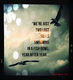 pink floyd lyric quotes - Google Search