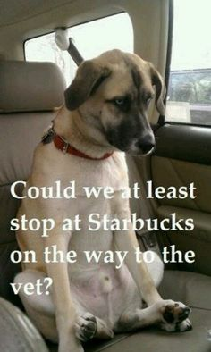 Starbucks dog.This is for you Katie.