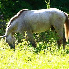 Bañado de luz en el llano #Llanos #Venezuela #caballo #horse #photooftheday #foto #fotografosdevenezuela #photographer #instalike #instave #instamood #instacool #insta_ve #insta_vzla #MiLlanoEstrella #ElNacionalWeb #Zeuscronos