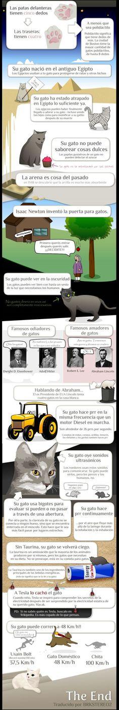 Cosas de los gatos