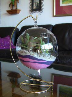 Succulent Terrarium, Succulent Orb, Hanging Succulent Garden, House warming Gift.. $28.00, via Etsy.