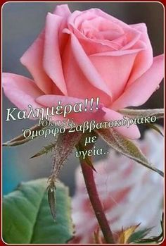 Good Night, Good Morning, Beautiful Pink Roses, Flowers, Nighty Night, Good Day, Have A Good Night, Bonjour, Florals