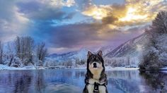 Adventures throughout the Pacific Northwest with my Agouti Siberian husky rescue- Kyro.