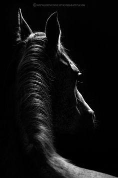 black horse sihouette