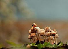 Snail & mushrooms - null
