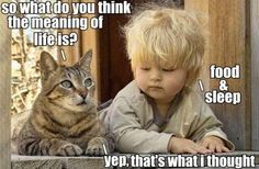 So what do you think the meaning of life is? #catoftheday