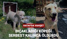 Hatay'ın Samandağ ilçesinde bıçaklayarak yaraladığı köpeği serbest kalınca öldürdü.