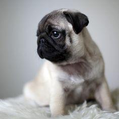 18 Pet Portrait Ideas                                                                                                                                                                                 More