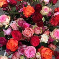 VALENTINE ROSES ...  www.facebook.com/pages/Krijnen-wealth-of-flowers/1409308935965781