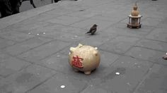 """Share this """"Street performing bird puts coins in piggy bank"""" animated gif image with everyone. Gif4Share is best source of Funny GIFs, Cats GIFs, Dog GIFs to Share on social networks and chat."""