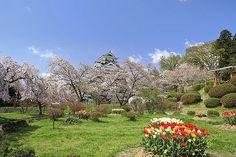 月岡公園の桜と上山城