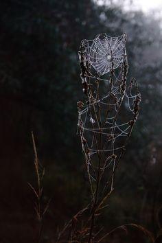 "sequence4: "" (via Rainy Strings by Joanna S / 500px) """