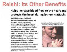 The healthy benefits of Ganoderma - The other benefits II